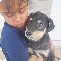Adopt A Pet :: Moses - Cincinnati, OH