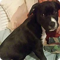 Adopt A Pet :: Holiday - Burlington, NJ