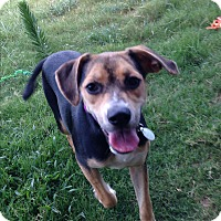 Adopt A Pet :: Zooey - Hagerstown, MD
