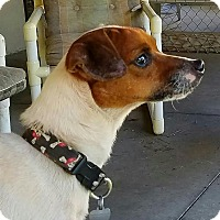 Adopt A Pet :: CRACKERJACK - Terra Ceia, FL