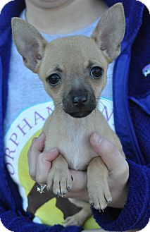 Chihuahua Mix Puppy for adoption in Atlanta, Georgia - Olivia