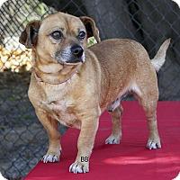 Adopt A Pet :: Nemo - Santa Barbara, CA