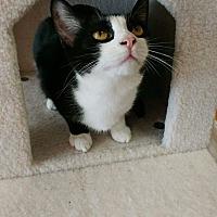 Adopt A Pet :: Lady - Columbus, OH