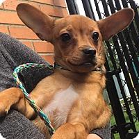 Adopt A Pet :: Chewy - Bucks County, PA