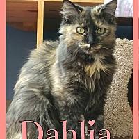 Adopt A Pet :: Daliha - Corinth, NY