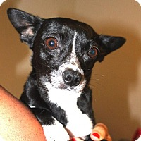 Adopt A Pet :: Winnie***Hold*** - New Smyrna Beach, FL