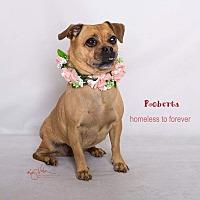 Adopt A Pet :: Roberta - Sherman Oaks, CA