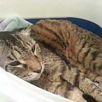 Adopt A Pet :: Roscoe - Margate, FL