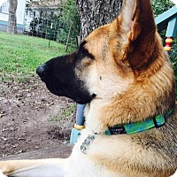German Shepherd Dog Mix Dog for adoption in Dripping Springs, Texas - Diesel-Referral