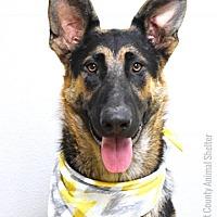Adopt A Pet :: Miles - Dublin, CA
