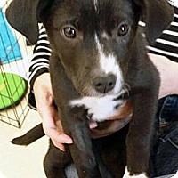 Adopt A Pet :: Ludmina - Marietta, GA