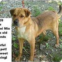 Adopt A Pet :: # 248-09 @ Animal Shelter - Zanesville, OH