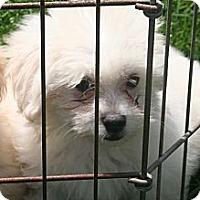 Adopt A Pet :: Moriah - Garden Grove, CA
