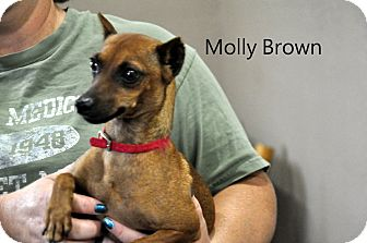 Terrier (Unknown Type, Small) Mix Dog for adoption in Sedan, Kansas - Molly Brown