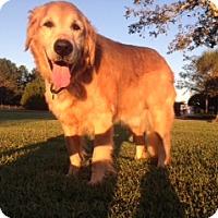 Adopt A Pet :: Jeb - New Canaan, CT