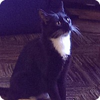 Adopt A Pet :: Nyla - Oxford, CT