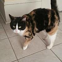 Adopt A Pet :: Bar-b-Que $35.00 - Buford, GA