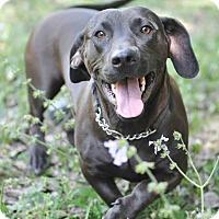 Adopt A Pet :: Taffy - Ormond Beach, FL