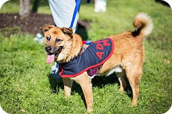 German Shepherd Dog Mix Dog for adoption in Munford, Tennessee - Petey (See Video)