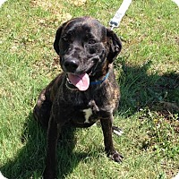 Adopt A Pet :: Summer - Larned, KS