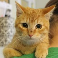 Adopt A Pet :: Tiger - Amory, MS