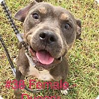 Adopt A Pet :: #38 - Seguin, TX