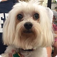 Adopt A Pet :: Match (Stretch) - Orlando, FL