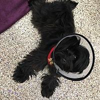 Adopt A Pet :: Kenji - Thousand Oaks, CA