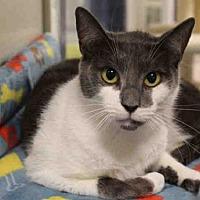 Adopt A Pet :: BANDIT - Hampton Bays, NY