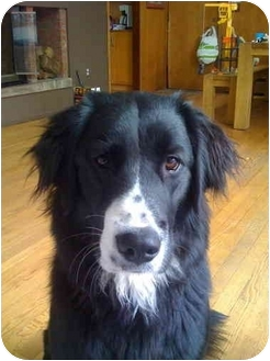 Border Collie Mix Dog for adoption in Old Bridge, New Jersey - Keely