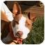 Photo 1 - American Pit Bull Terrier Mix Dog for adoption in Berkeley, California - Lulu