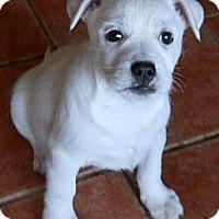 Adopt A Pet :: Wolfgang - dewey, AZ