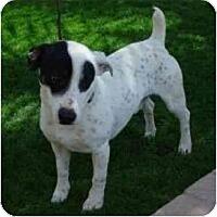 Adopt A Pet :: Aces - Scottsdale, AZ