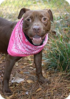 American Pit Bull Terrier Mix Dog for adoption in Snellville, Georgia - Twiggy