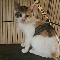 Adopt A Pet :: Hope - Tampa, FL