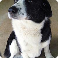 Adopt A Pet :: Sparky - Tahlequah, OK