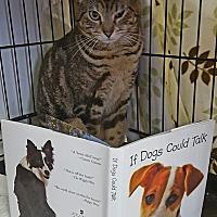 Adopt A Pet :: Reese - Acushnet, MA