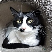 Adopt A Pet :: Ivanna White - Mission, KS