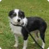 Adopt A Pet :: Connor (adoption pending ) - Rexford, NY