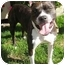 Photo 2 - American Pit Bull Terrier Mix Dog for adoption in Berkeley, California - Athena
