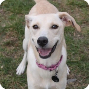 Terrier (Unknown Type, Medium) Mix Dog for adoption in Naperville, Illinois - Bell