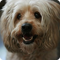 Adopt A Pet :: Matty - Canoga Park, CA