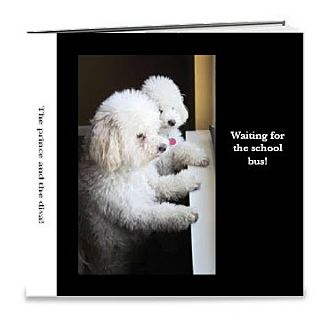 Coton de Tulear/Poodle (Miniature) Mix Dog for adoption in Germantown, Ohio - Monette and Pierre