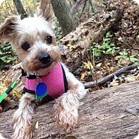 Adopt A Pet :: Chelsey - Beechgrove, TN