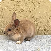 Adopt A Pet :: Kung Pao - Bonita, CA