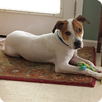 Adopt A Pet :: Sparky - Hagerstown, MD