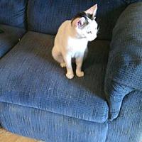 Adopt A Pet :: Mia - Fayetteville, TN