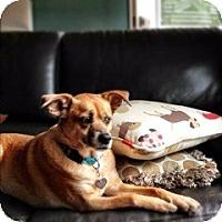 Adopt A Pet :: Reba - Nashville, TN