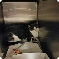 Adopt A Pet :: Zak - Indianapolis, IN