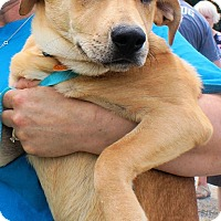 Adopt A Pet :: Stuart - in Maine - kennebunkport, ME